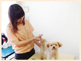 仙台市で個室の猫専門ペットホテル/キャットホテ …